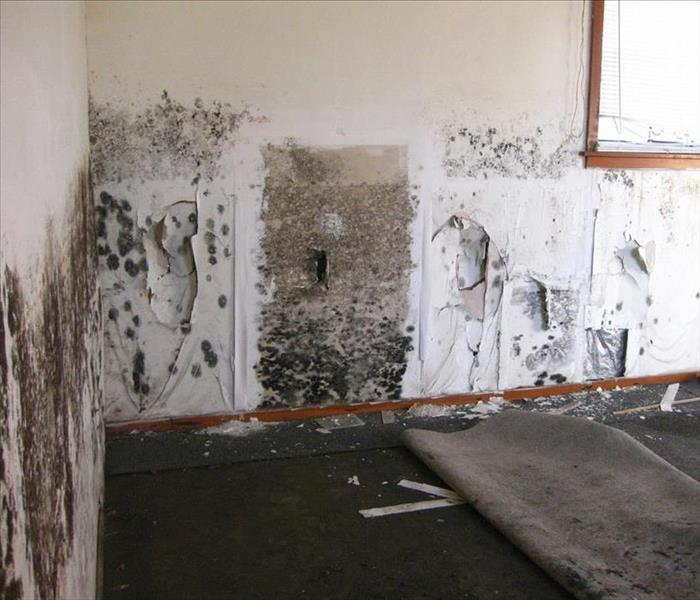 Mold Remediation Common Mold Misconceptions