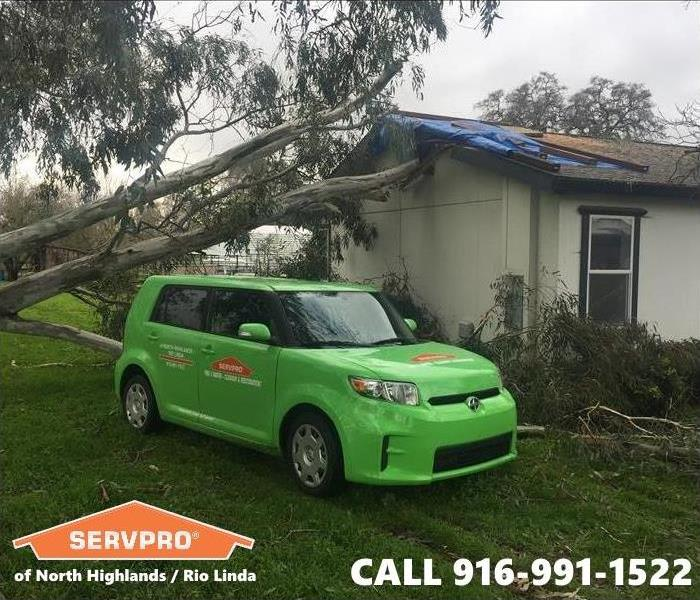 Local Sacramento home after this tree fell as a result of strong wind conditions.